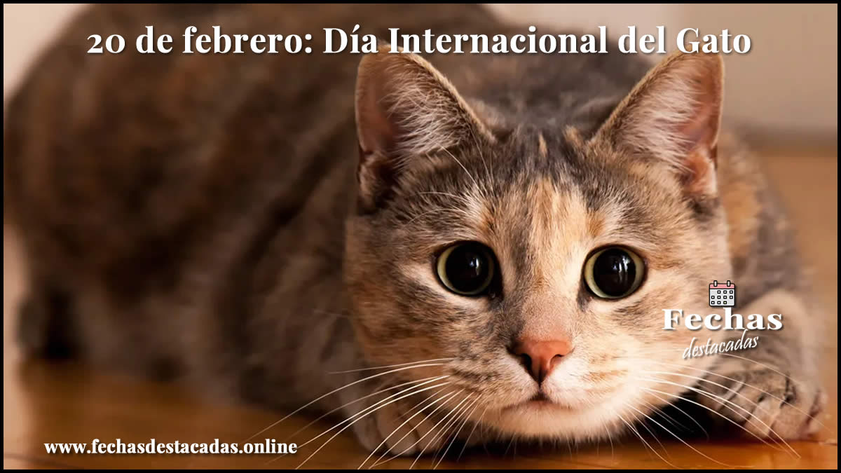 20 de febrero: Día Internacional del Gato