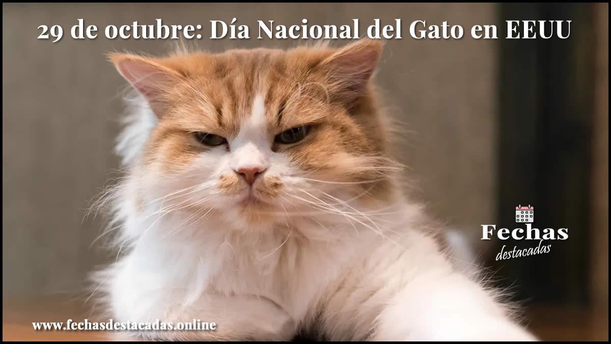 29 de octubre: Día Nacional del Gato en EEUU