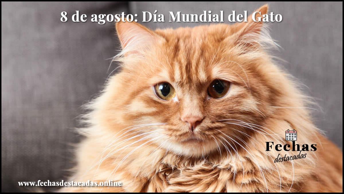 8 de agosto dia mundial del gato